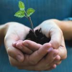 خطر انقراض گونه های ناب گیاهان دارویی