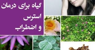 درمان استرس و اضطراب با کمک گیاهان