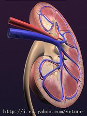 kidney5