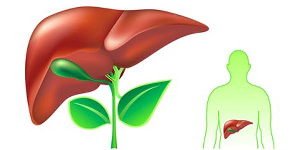 درمان کبد چرب