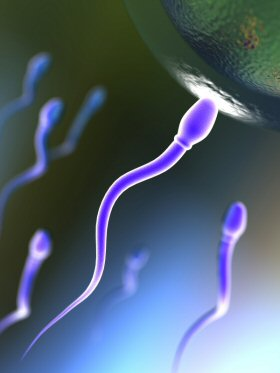 sperm_egg_4is-اسپرم
