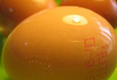 تخم مرغهای حلال و تخم مرغهای حرام