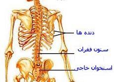 استخوان بندی (اسکلت)