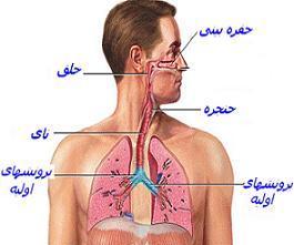 دستگاه تنفس