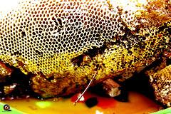 عسل طبیعی و واقعی را تشخیص دهید