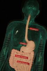 digestion1