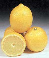 limoo-shirin