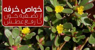 گیاه خرفه و یک دنیا خاصیت ، از تصفیه خون تا رفع عطش - پارسی طب