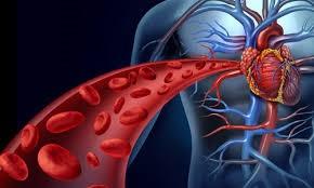 افزایش غلظت خون باعث تصلب شراین می شود