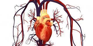 غلظت خون باعث سکته قلبی می شود.