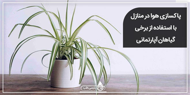 پاکسازی هوا در منازل با استفاده از برخی گیاهان آپارتمانی