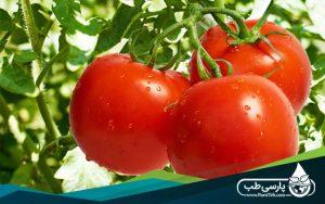 گوجه فرنگی و کاهش جذب الاینده ها