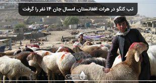 تب کنگو در هرات افغانستان، امسال جان 14 نفر را گرفت