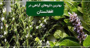 بهترین داروهای گیاهی در افغانستان