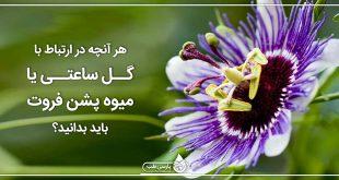 هر آنچه در ارتباط با گل ساعتي یا میوه پشن فروت بايد بدانيد؟