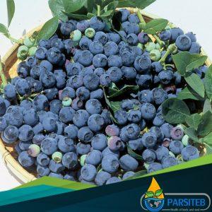 20 مادة غذائية مفيدة لصحة القلب!- التوت الأزرق